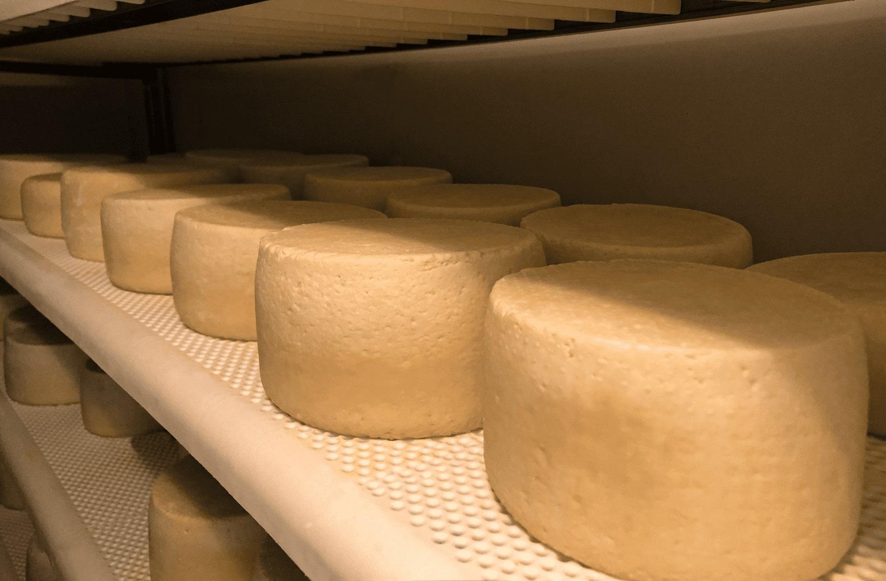 formaggio eccellenza pecorino del monte poro fresco